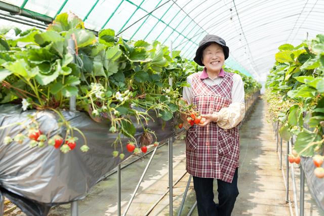 イチゴ農家の岡部様