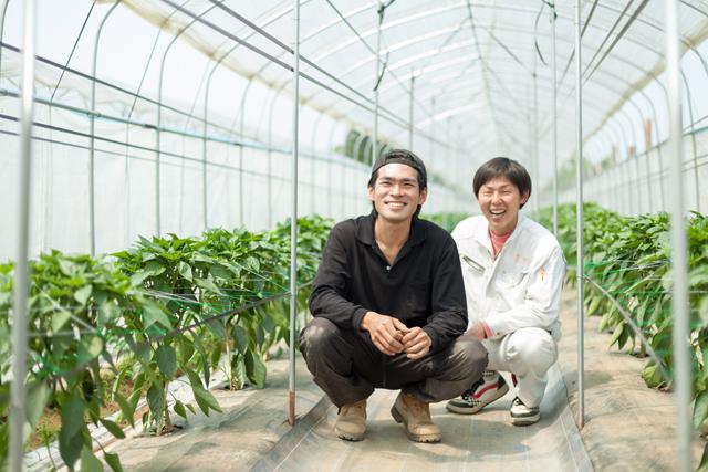 ピーマン栽培の桑原様