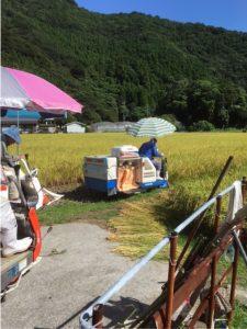 2016.07.29 蒲江 コシヒカリ2